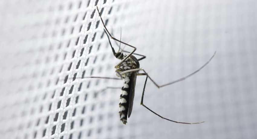 vidy-moskitnyh-setok-foto-video-kak-vybrat-setki-na-plastikovye-okna-1