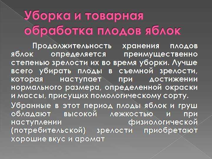 kak-sohranit-yabloki-v-domashnih-usloviyah-podgotovka-i-sposoby-hraneniya-12