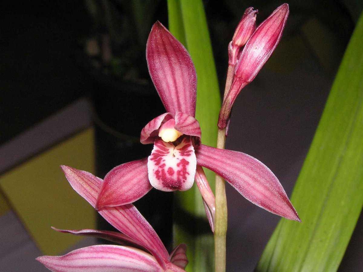 aromatnye-orhidei-foto-video-nazvanie-i-opisaniya-vidov-2