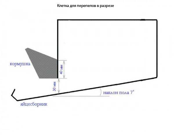 Чертеж клетки в разрезе (Нажмите на фото чтобы увеличить).