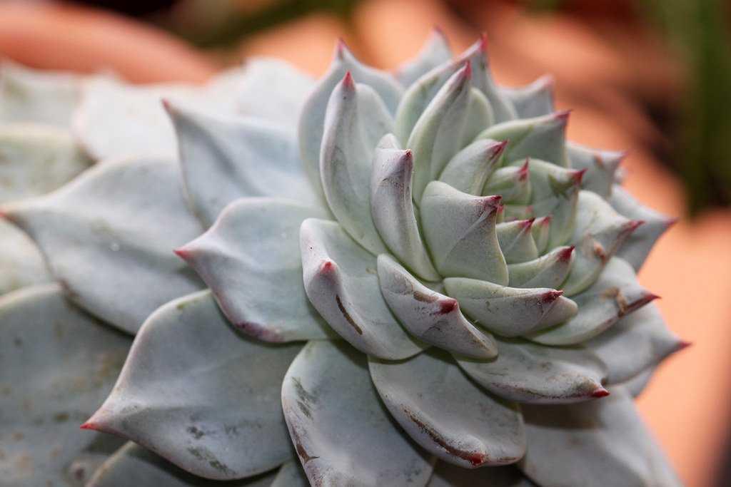 kaktusy-sukkulenty-foto-video-samye-neobychnye-sukkulenty-vidy-i-nazvaniya-5