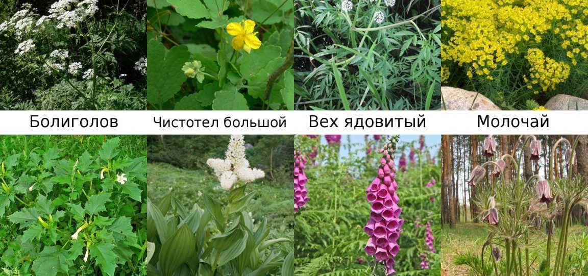 chem-kormit-krolikov-foto-video-kormlenie-v-sootvetstvii-s-sezonom-27