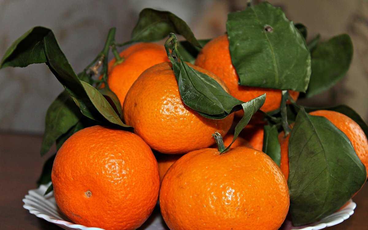 umeloe-upotreblenie-fruktov-i-yagod-v-pishhe-zametno-ukrepit-vashe-zdorove-1
