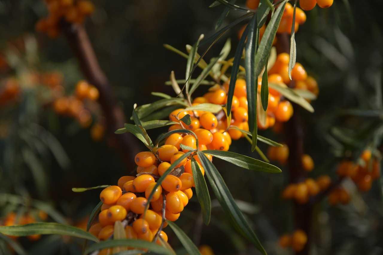 umeloe-upotreblenie-fruktov-i-yagod-v-pishhe-zametno-ukrepit-vashe-zdorove-2