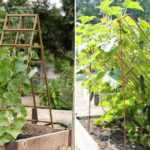 Шпалера для огурцов: фото, видео, особенности подвязки растений