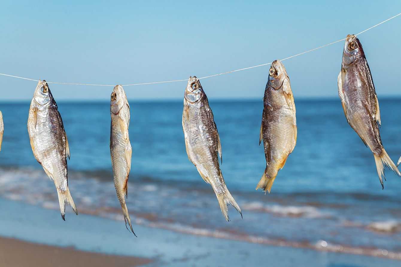 lovlya-plotvy-foto-video-pravila-i-sekrety-rybalki-na-plotvu-11