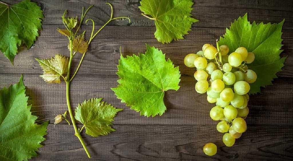 iz-kakih-sortov-vinograda-izgotavlivayut-vina