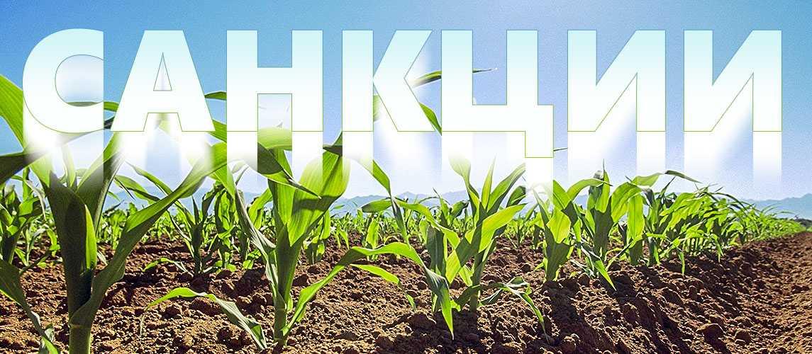 rastenievodstvo-otrasli-razvitie-proizvodstvo-produkczii-vliyanie-sankczij-13