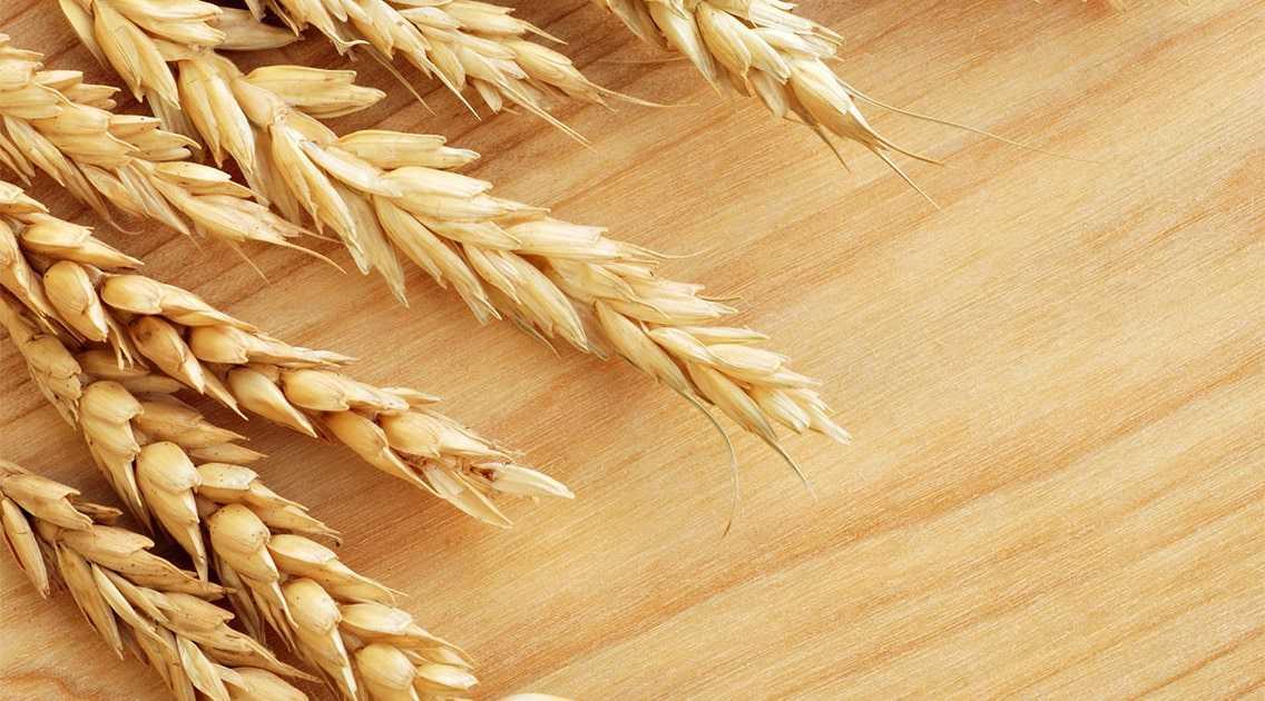 rastenievodstvo-otrasli-razvitie-proizvodstvo-produkczii-vliyanie-sankczij-9