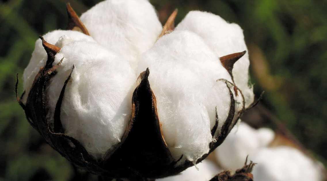 rastenievodstvo-otrasli-razvitie-proizvodstvo-produkczii-vliyanie-sankczij-2
