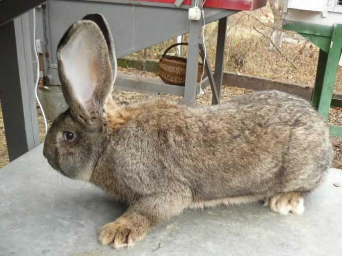 Обычно кролики находятся в клетках, в которые устанавливаются поилки и кормушки для еды.