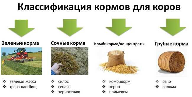 Классификация кормов.