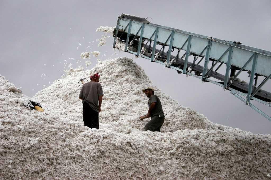 Очистку хлопковых волокон от семян производят на хлопкоочистительных заводах.