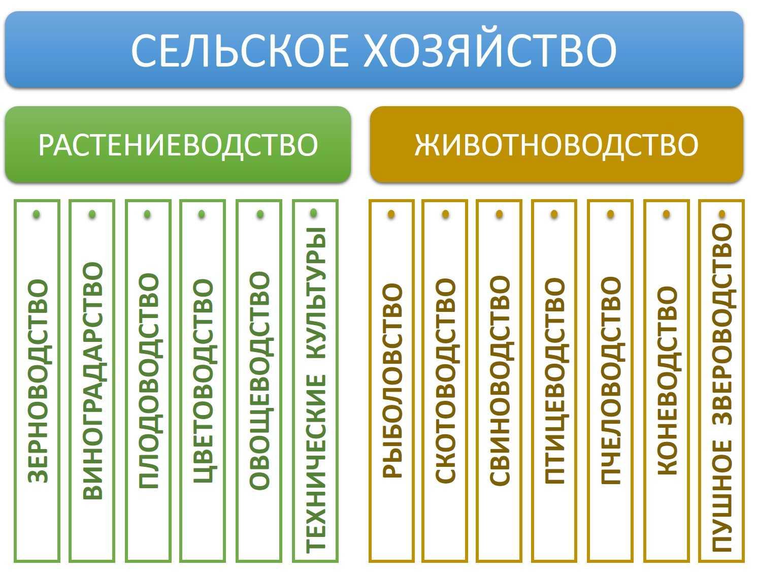 sistemy-zhivotnovodstva-osnovnye-vidy-i-elementy-6