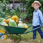 Тачка садовая: фото, видео, какую выбрать, рейтинг лучших моделей