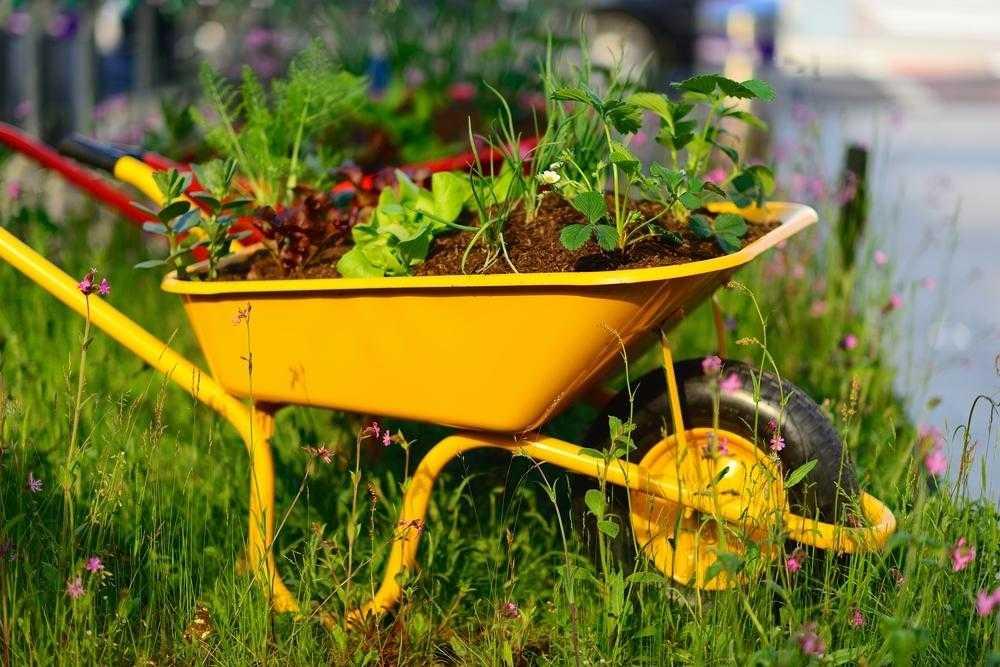 Пластиковая садовая тачка.