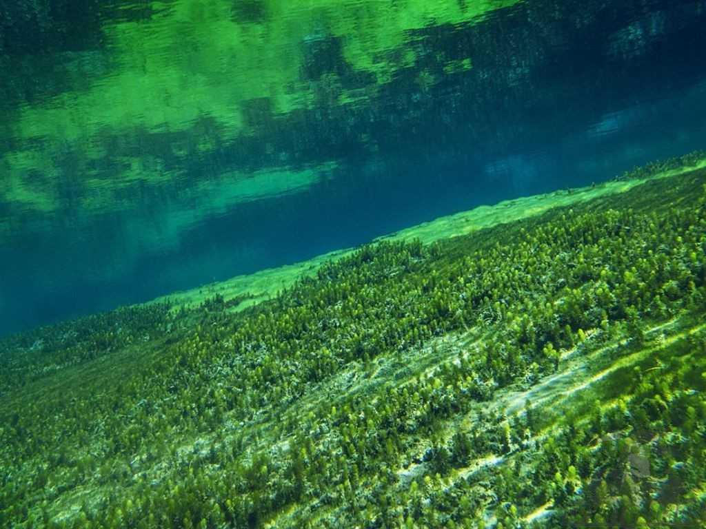 Растительный и животный мир озера влияет на образование отложений.