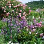 Штамбовые розы: фото, укрытие на зиму, посадка и уход