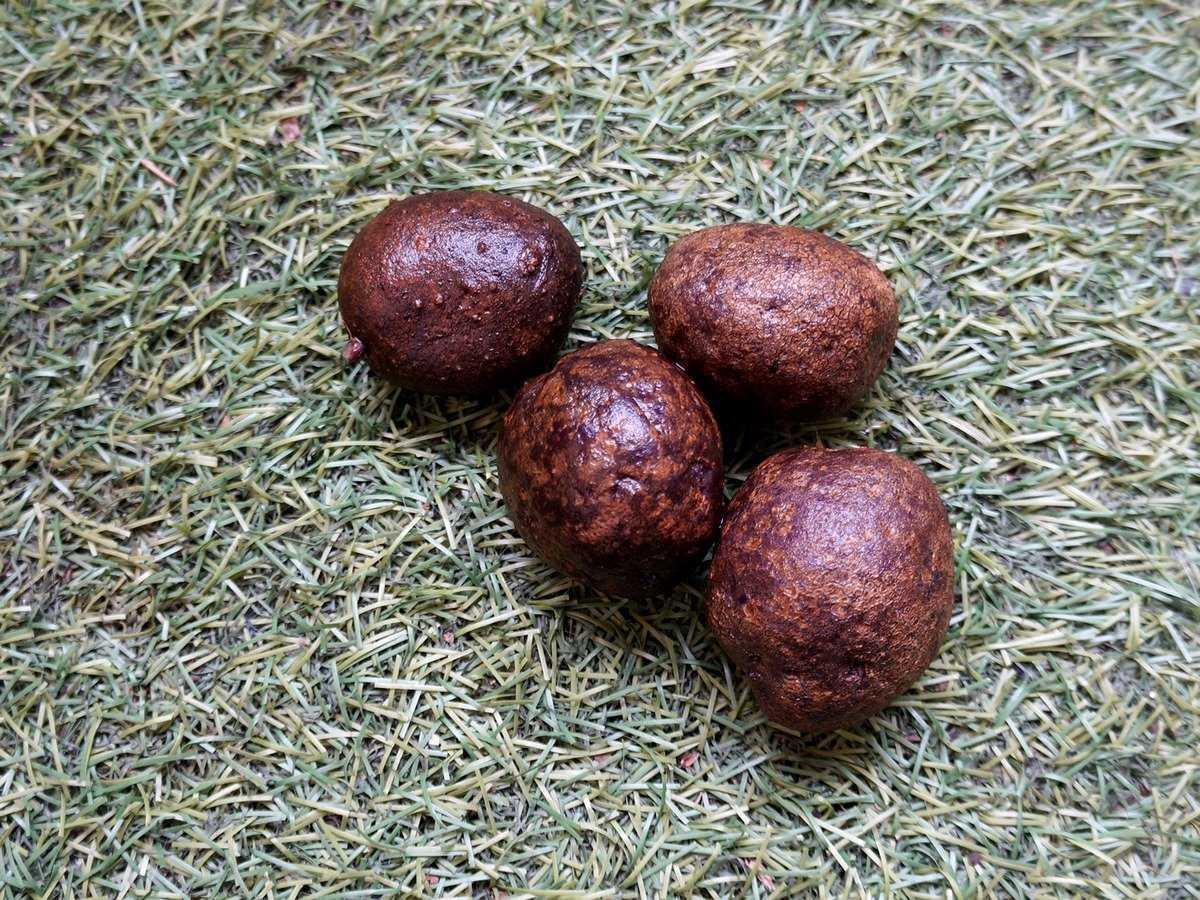 fioletovyj-kartofel-foto-poleznye-svojstva-osobennosti-vyrashhivaniya-3