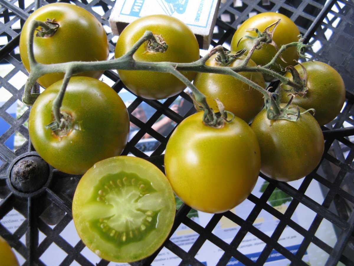 luchshie-sorta-pomidor-kakoj-vybrat-lichnyj-opyt-vyrashhivaniya-3