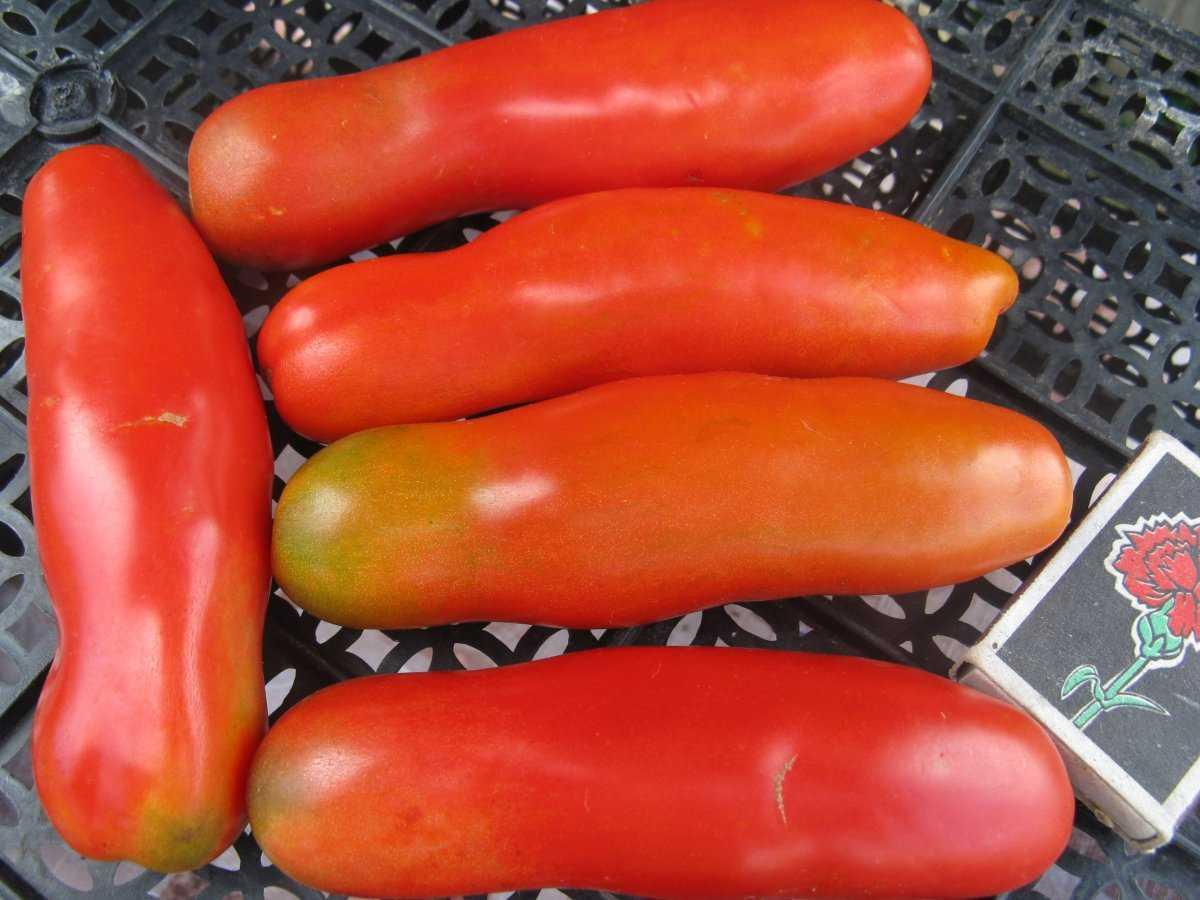 luchshie-sorta-pomidor-kakoj-vybrat-lichnyj-opyt-vyrashhivaniya-5
