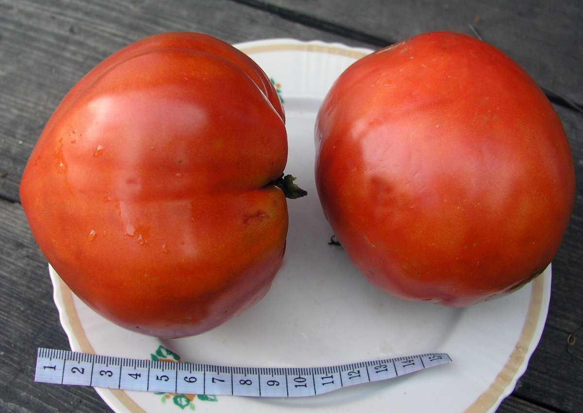 luchshie-sorta-pomidor-kakoj-vybrat-lichnyj-opyt-vyrashhivaniya-7