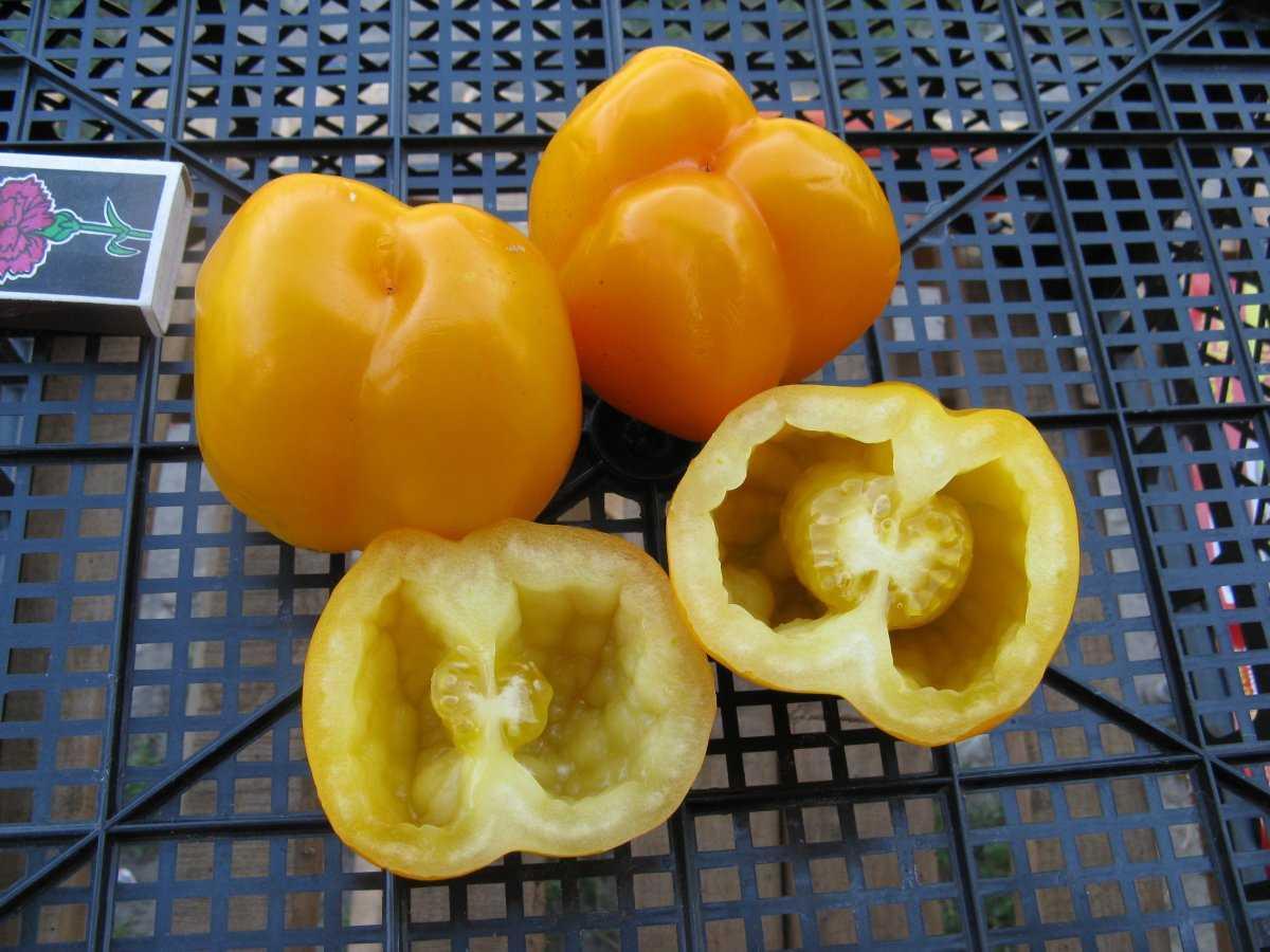 luchshie-sorta-pomidor-kakoj-vybrat-lichnyj-opyt-vyrashhivaniya-8