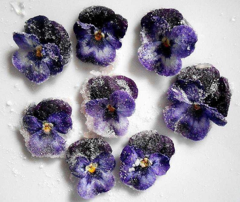 sedobnye-czvety-violy-foto-opisanie-kakie-vidy-sedobny-sbor-i-ispolzovanie-8