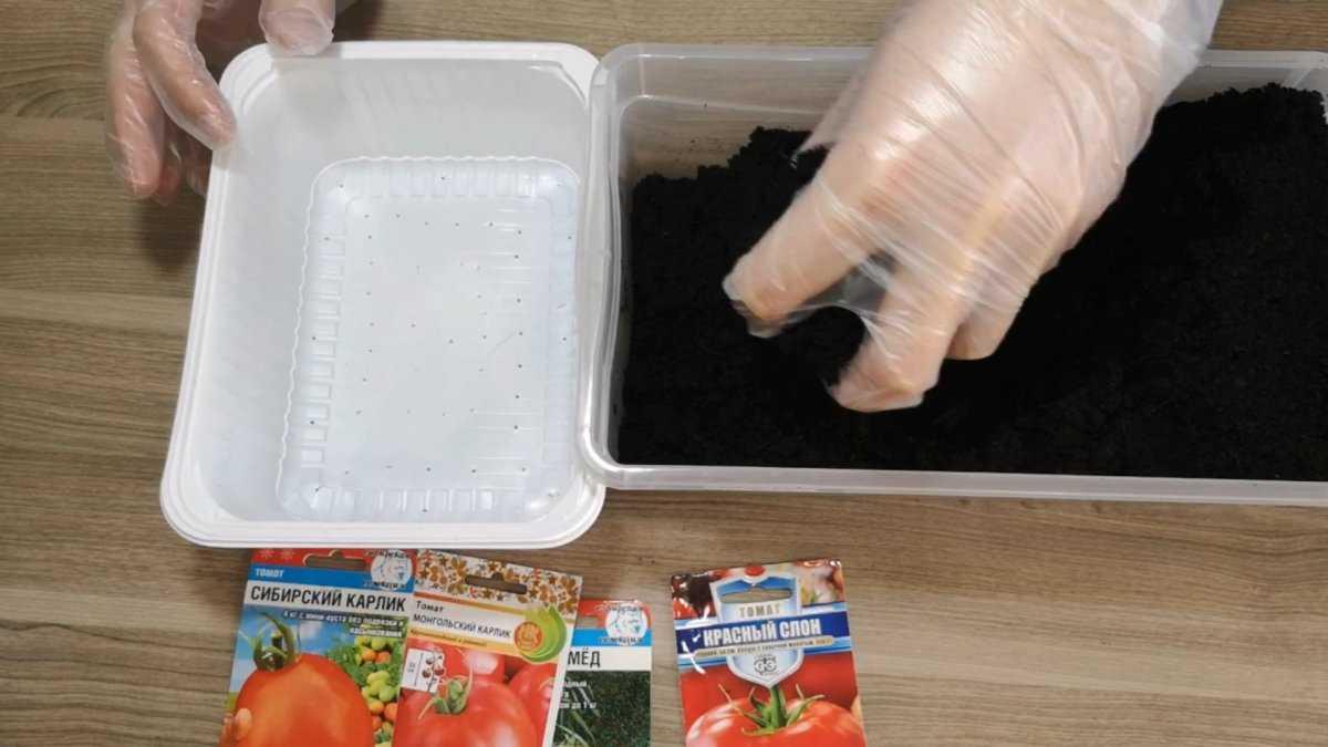nizkoroslye-tomaty-preimushhestva-vyrashhivaniya-osobennosti-poseva-semyan-na-rassadu-3