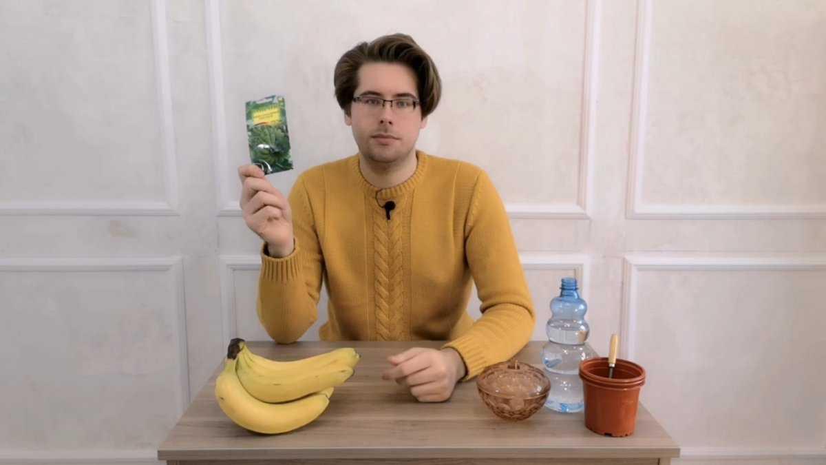 banan-v-domashnih-usloviyah-usloviya-vyrashhivaniya-posadka-i-uhod-2